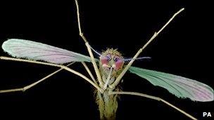 Mosquito, PA