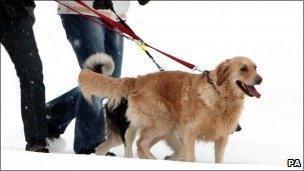 Dogs walking generic