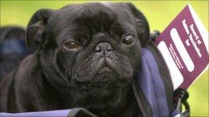 Dog with passport