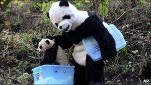 A researcher dressed as a panda at China's Wolong Giant Panda Reserve Center, in Sichuan province