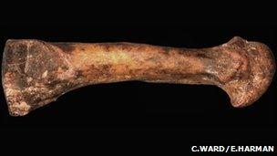 Foot bone (Carol Ward and Elizabeth Harman)