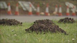 Mole hills on a busy roundabout