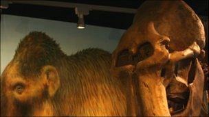 The Shropshire Mammoth