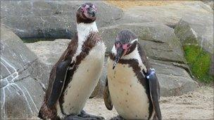 Penguins at Sea Life Centre in Scarborough. Picture by Nick Fletcher
