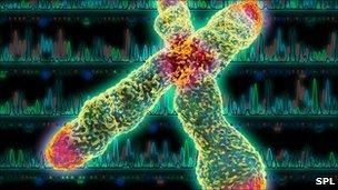 X chromosome: Telomeres are shown in red
