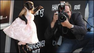Monkey film star