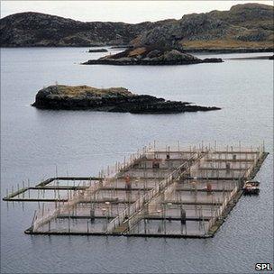 Salmon farm in the Western Isles