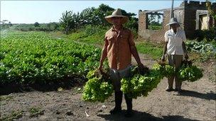 farmers in Cuba harvesting lettuce - file photo