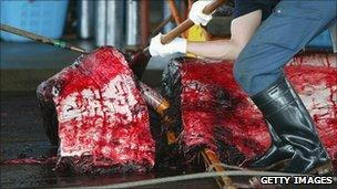 Whale being cut up