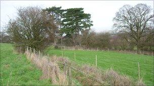 Habitat created at Nut Hill for the barn owl mitigation site