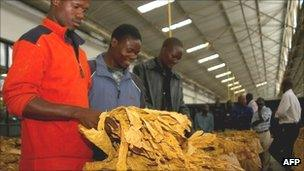 Zimbabwean tobacco growers and merchants inspect tobacco at the Tobacco Auction Floors at the start of the annual selling season in Harare in February 2010