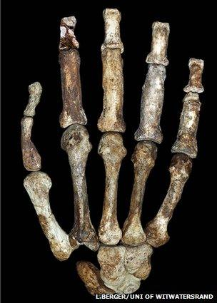 African fossils put new spin on human origins story