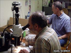 Francesco d'Errico at the microscope