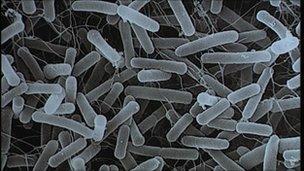 straen anhysbys o E-coli