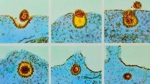A virus entering a cell