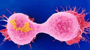 Cell canser yn rhannu