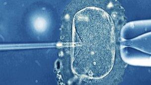 Micrograff golau o wy dynol ar fin cael ei chwistrellu