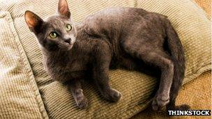 A cat lying down, from Thinkstock