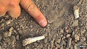 Foot bones (CMNH)