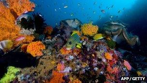 Coral reef scene in Raja Ampat Islands