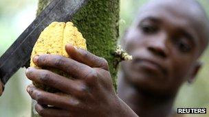 A man cutting a cocoa fruit in Ivory Coast