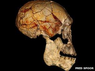 Skull of new species of human