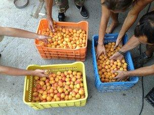 Fruit from Evia commune