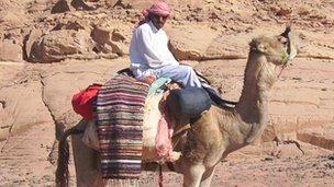 Bedouin man on a camel