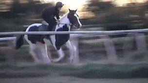 Angrove RumBaba in training on the gallops