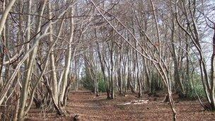 Trees with suspected as dieback