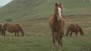 Abandoned horses