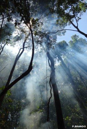 Sunlight shining through the rainforest canopy (Image: Paulo Brando)
