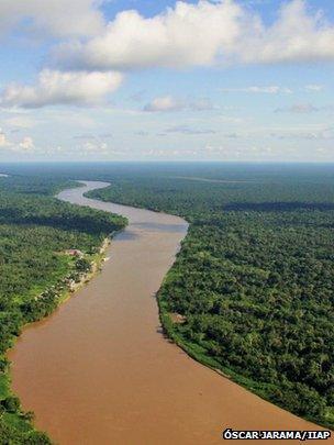 Amazonian river swamp