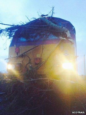train hit by tree