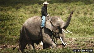 A trainer with a Sumatran elephant