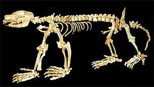 Nimbadon skull (AP)