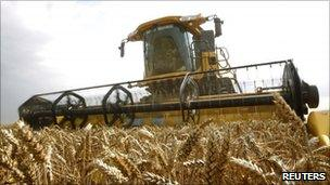 Wheat being harvested in France
