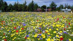 Wild flower on roundabout in Inverness. Pic: Highland Council