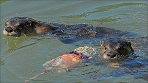 Otters and lolly - James Lees