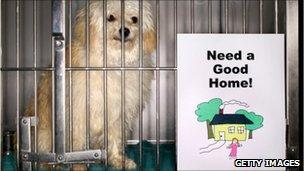 Dog waiting to be adopted