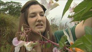 Emma Harrington removing Himalayan balsam
