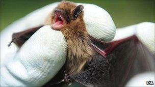 Kielder Forest bat survey