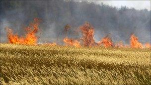 Cereal crops on fire in Russia