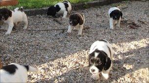 Some of the eight puppies that were stolen
