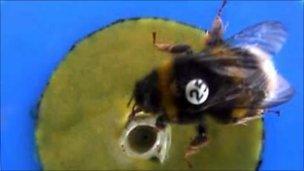 Bumblebee on an experimental platform