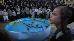Ultra-Orthodox Jews pray in front of a plastic pool filled with water and live fish in the ultra-Orthodox Israeli city of Bnei Brak, near Tel Aviv, on 16 September 2010, as they perform the Tashlich ritual during which they cast their sins into the water, one day before Yom Kippur.