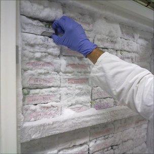 Samples in freezer