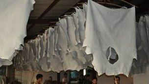 Animal skins hanging in tannery