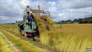 Harvest in France (file pic)