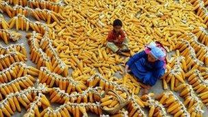 Chinese corn